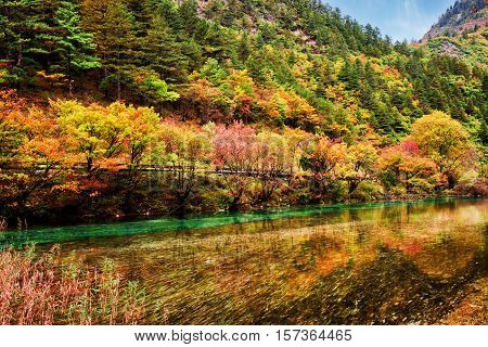 Amazing River With Crystal Clear Water Among Fall Woods