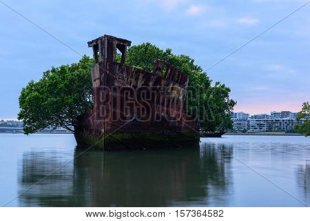 102 year old Shipwrecks of Homebush Bay in Sydney Australia became A Floating Forest.