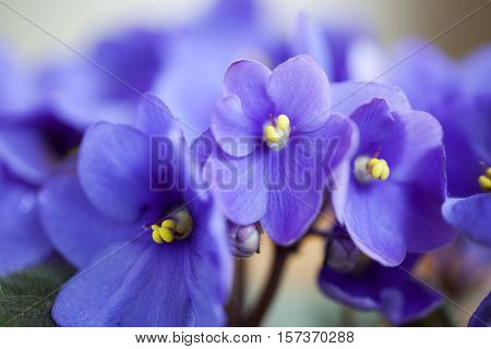 The close up of the violets flowers