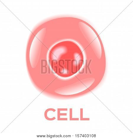 skin cell vector . skin cell icon