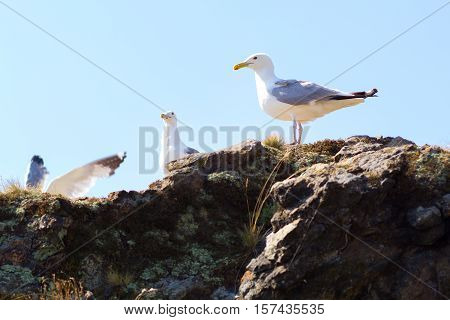 Seagulls sitting on the rocks on the shore of Lake Baikal