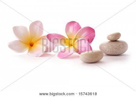 frangipani flowers and zen SPA stones on white background