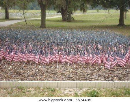 Small garden of US flags at a