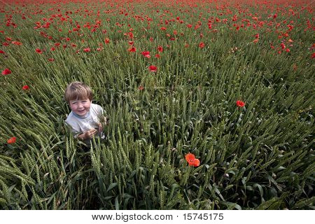 young boy in field of red poppies and corn