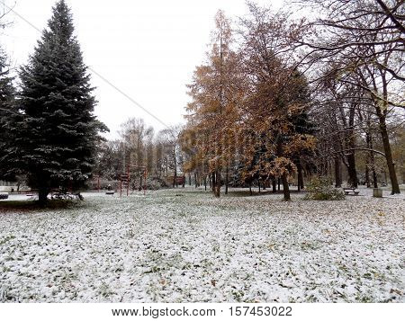 Snow in park with many deciduous trees after autumn during winter
