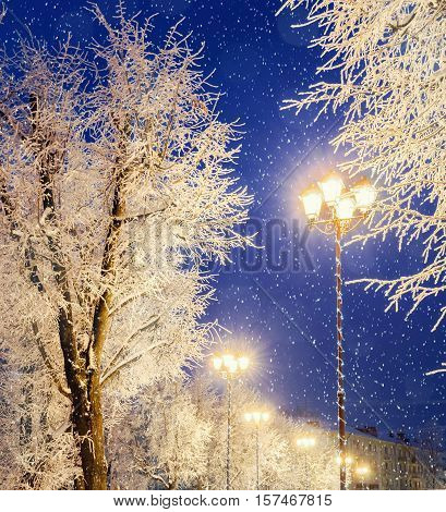 Winter night. Winter colorful night city - shining lantern among the winter snowy trees and winter snowflakes. Winter landscape of bright winter city night.Winter snowy night -winter landscape