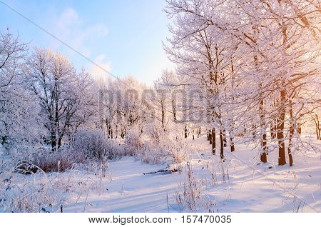 Winter landscape - frosty trees in winter forest in the sunny morning. Winter landscape with winter trees. Tranquil winter nature in sunlight -winter landscape of nature covered with winter snow