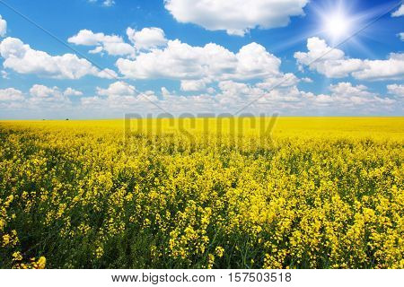 Yellow Rapeseed Flowers On Field With Blue Sky And Clouds, Burgenland, Austria