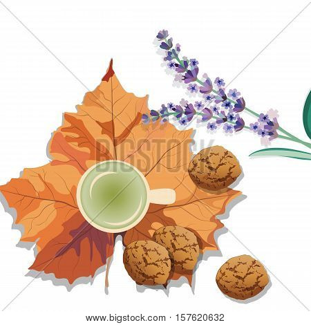 Hot steaming cup of green tea, lavender and autumn leaf isolated. Seasonal cookies and morning coffee concept. Vector illustration
