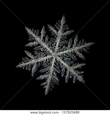 Snowflake isolated on black background. This is macro photo of real snow crystal: large stellar dendrite with traditional shape, complex structure and six ornate arms with lots of side branches and small details.