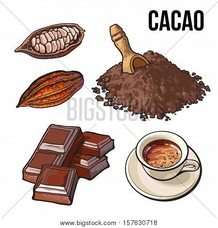 Hand drawn pile of cocoa powder, cacao fruit and cup of hot chocolate, ripe cacao fruit, sketch vector illustration isolated on white background. Ground cocoa powder, raw cacao beans and hot chocolate