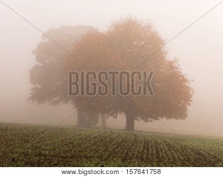KIRKBY IN ASHFIELD ENGLAND - OCTOBER 31: Trees in the fog England. In Kirkby In Ashfield Nottinghamshire England. On 31st October 2016.
