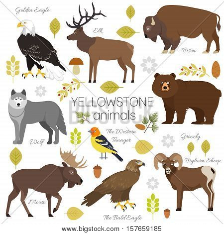 Yellowstone National Park animals set grizzly, moose, elk, bear, wolf, golden eagle, bison, bighorn sheep, bald eagle, western tanager, isolated on transparent background vector illustration.