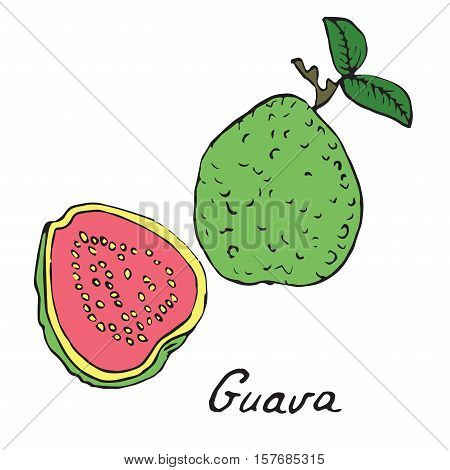Guava and sliced piece, hand drawn doodle, sketch in pop art style, vector