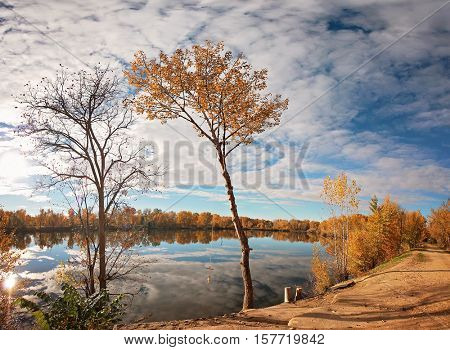 a large orange tree full of leaves ready to fall on a bright autumn day in a local public park with the sun setting behind a small pond with a rope swing hanging from a tree