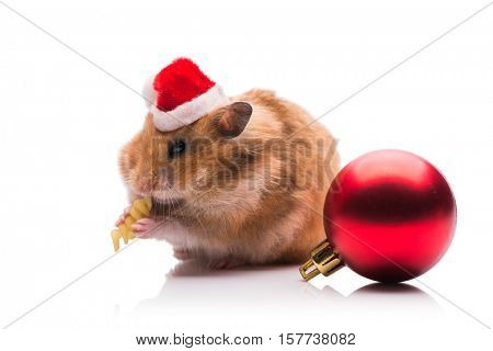 Cute hamster with santa hat isolated on white