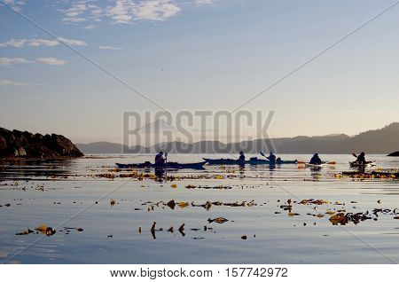 Kayakers silhouetted by the early morning light while floating on the calm waters of Kildidt Sound. Kelp in the forground and the fog shrouded mountains of Hunter Island British Columbia are in the distance.
