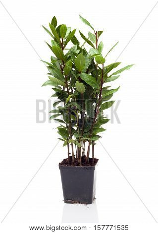 the plant is potted in a pot on white background