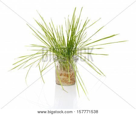 Wheat Grass In A Jar On White Background