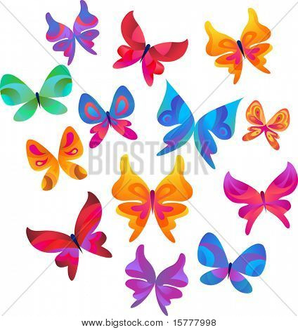 many color butterflies