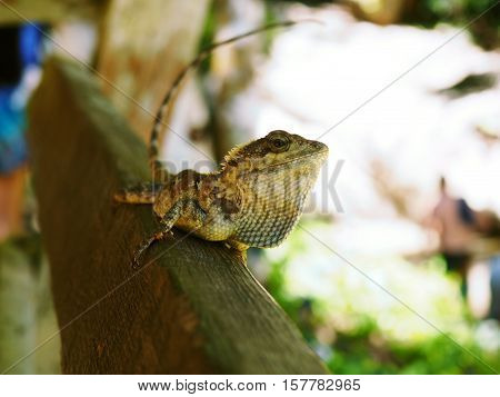 Close up lizard on old wood fence happy face