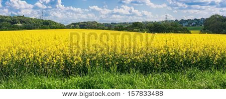 Blooming canola field with beautiful blue sky in the background. Symbolizing green energy.