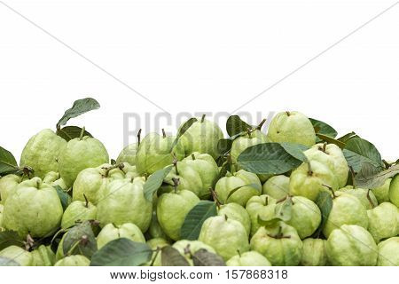 Pile of fresh green guava in market isolated on white background. Saved with clipping path