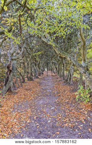 The 160m hornbeam avenue tree tunnel situated on the grounds of Palsjo Castle in Helsingborg. A public place loved by locals and tourists.