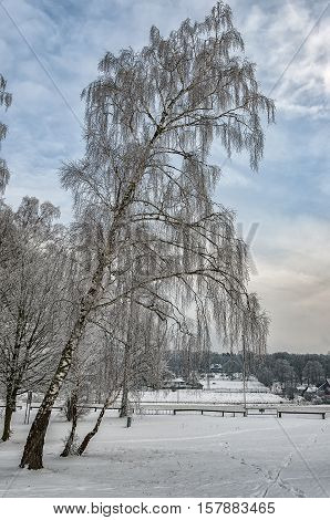 A group of trees on the banks of a frozen lake in the Swedish countryside at wintertime.