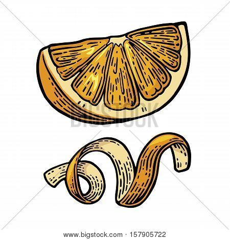 Lemon Slice and peel twirled . Isolated on white background. Vector color vintage engraved illustration. Hand drawn design element for label and poster