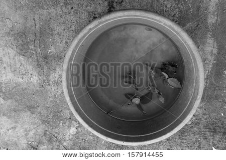 Rose in a bowl with water in black and white. Keeping rose in round vessel filled with water . Rose regeneration in water bowl.