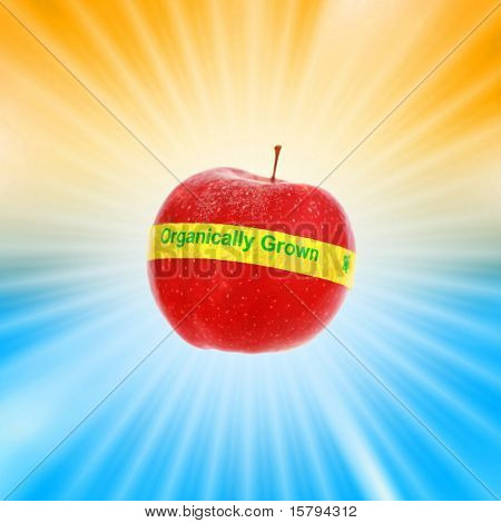 Ripe red organic apple over shiny burst background. Shallow DOF, focus on organic label.