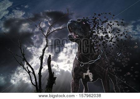 Disintegration of dog under the black clouds. Fotomanipulation.