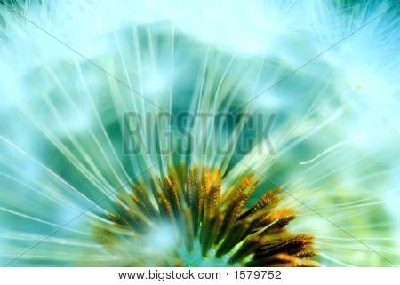 Hazy Concept Of A Dandelion