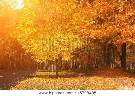 Beautiful yellow autumn aprk landscape