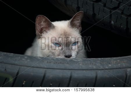 Hiding cat.Hide and wait for something in trye