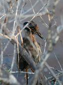picture of mockingbird  - Galapagos mockingbird on the Galapagos islands - JPG