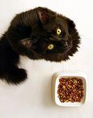 Постер, плакат: Кошка с не в настроении для производства продуктов питания