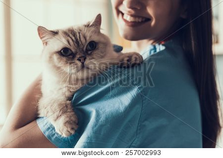 poster of Smiling Professional Veterinarian Holding Cute Cat. Female Doctor Veterinarian Is Holding Cute White