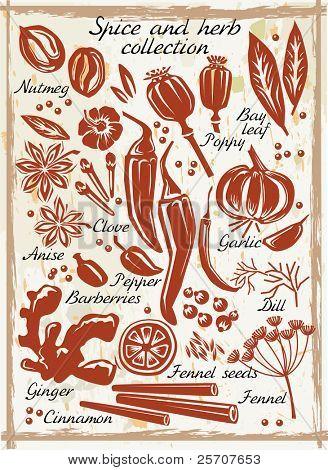 Постер, плакат: Коллекция специи и травы, холст на подрамнике
