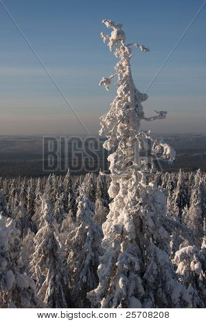 winter day with snow-covered fir trees and mountain on background