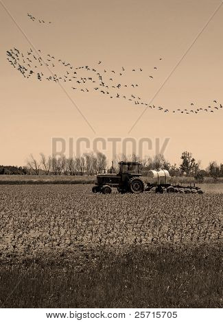Tractor at Fall Harvest with Migrating Birds Overhead
