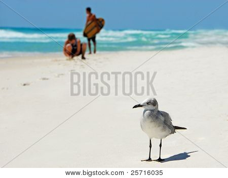 Seagull Looking Bored with Kids Playing on Beach in Background