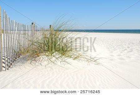 Beautiful Sand Dune with Grasses and Pretty Fence