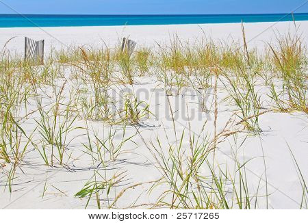 Young Sea Grass on Sand Dune