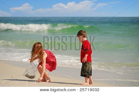 Young boy and girl collecting seashells on beautiful beach