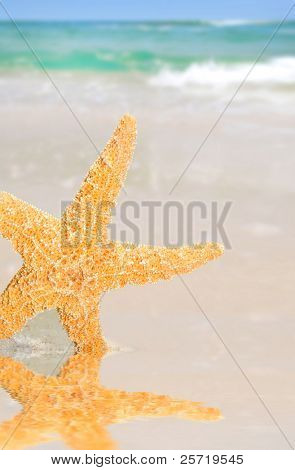 Pretty starfish by tidepool on beach with gorgeous ocean in distance