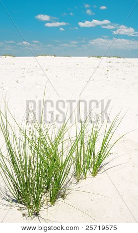 Green sea grass on sand dune under pretty sky