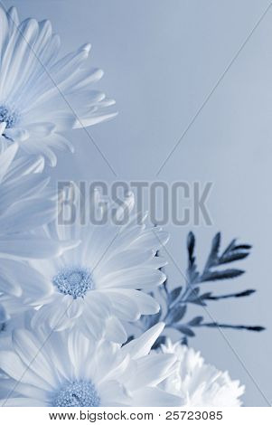 Pretty daisies and carnation in cyanotype