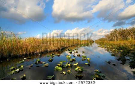 Beautiful Everglades